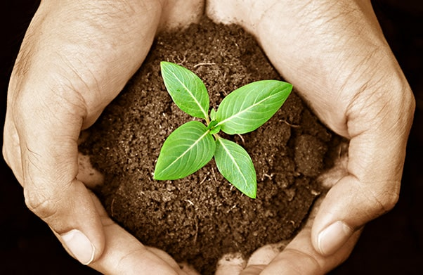 Hands holding dirt and sprouting plant