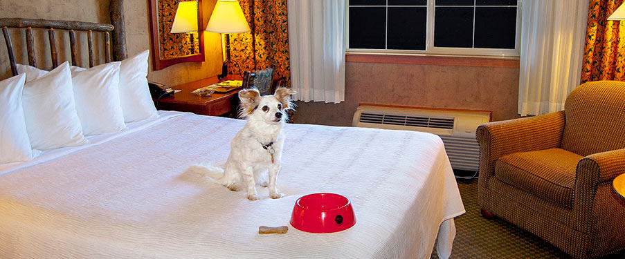 Traveling with pets at Mill Casino