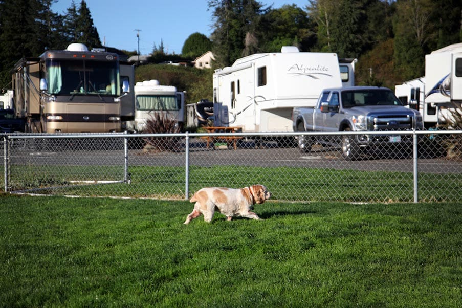 The Mill RV Park Dog Park.